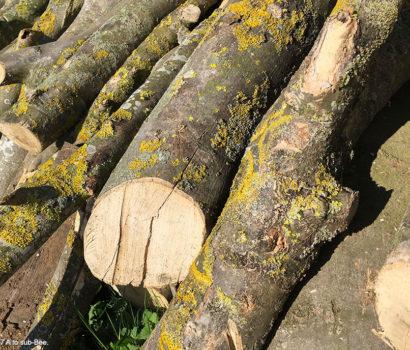 It's Log