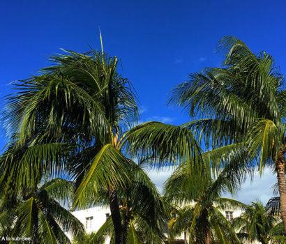 Palms in a balmy sky